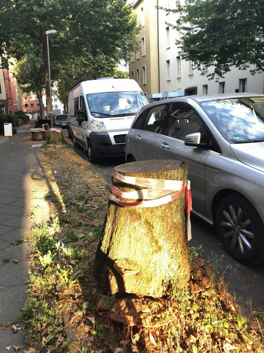 Baumstümpfe (Stubben) im Ehrenfeld - hier: Hugo-Schultz-Straße