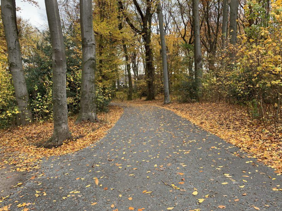 Weg im Rechener Park im Bochumer Ehrenfeld #boEhrenfeld