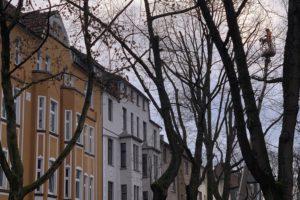 Baumfällung in der Yorckstraße im Bochumer Ehrenfeld #boEhrenfeld