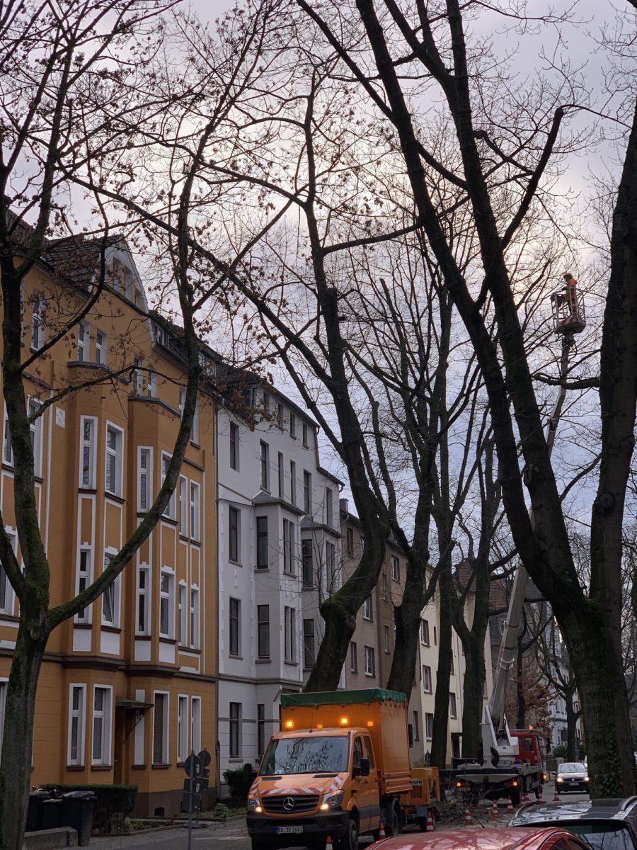 Baumfällungen in der Yorckstraße im Bochumer Ehrenfeld #boEhrenfeld