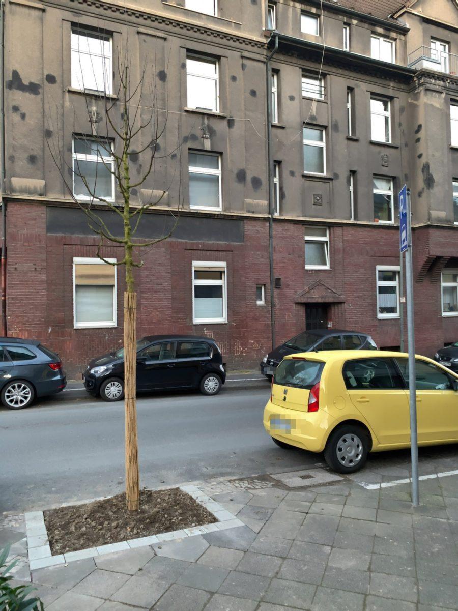 Neuer Baum in der Ewaldstraße (im Bochumer Ehrenfeld)
