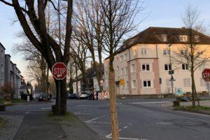 Neuer Baum in der Friederikastraße (im Bochumer Ehrenfeld)