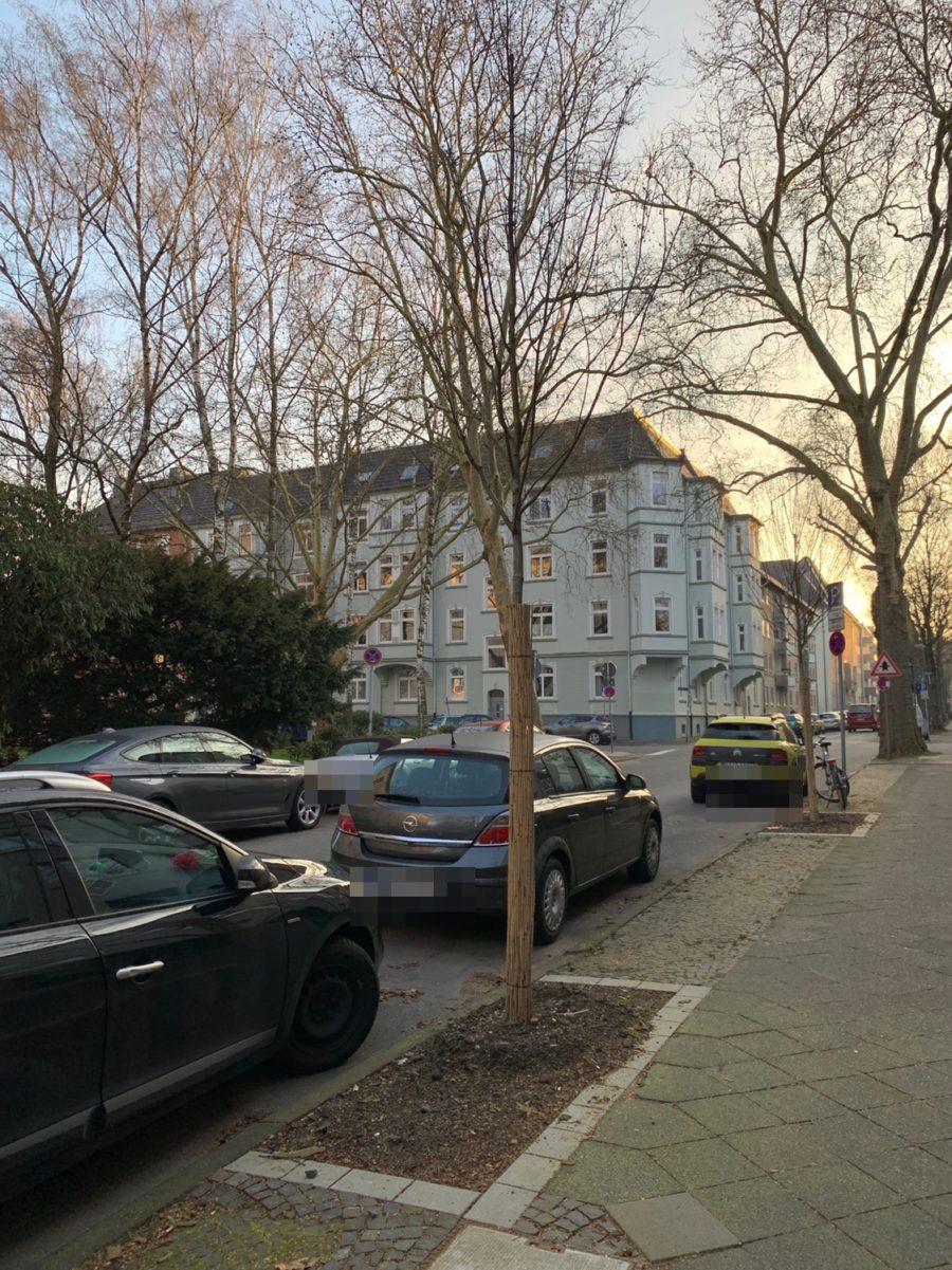 Neuer Baum in der Hugo-Schultz-Straße (im Bochumer Ehrenfeld)
