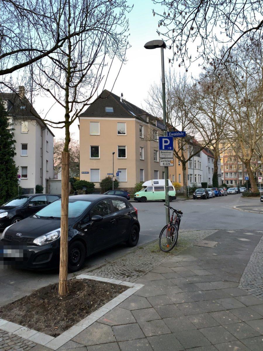 Neuer Baum in der Weiherstraße (im Bochumer Ehrenfeld)