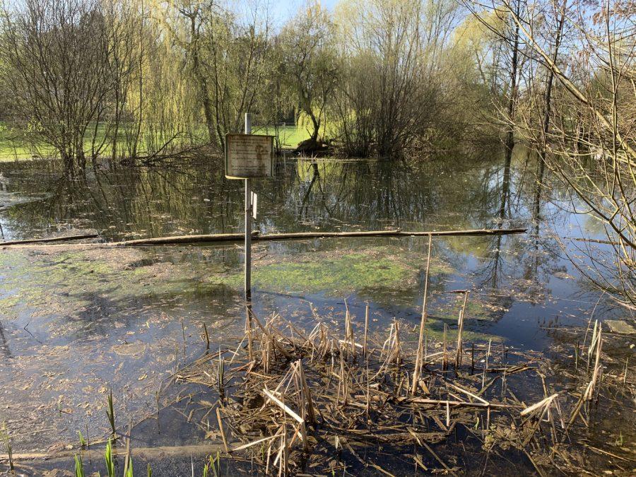 Im Wiesental: Im Teich sollen nicht nochmal die Fische bei großer Hitze verenden