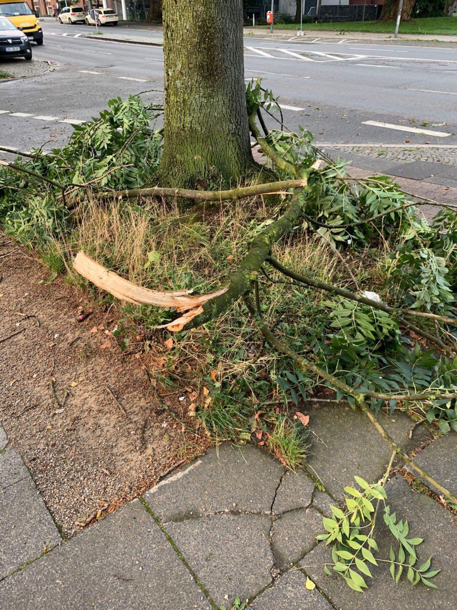 Sturm im Bochumer Ehrenfeld: abgefallene Äste auf der Königsallee