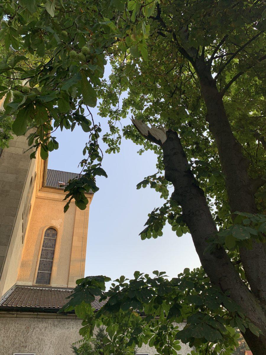 Sturm im Bochumer Ehrenfeld: abgeknickter Baum in der Hubertusstraße (an der Kirche St. Meinolphus-Mauritius)
