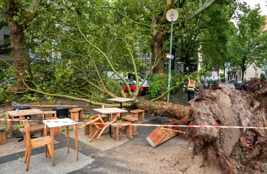 Umgekippter Baum auf dem Hans-Ehrenberg-Platz im Bochumer Ehrenfeld (Bild: Feuerwehr Bochum)