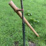 Stütze am Kirschbaum - (Einheitsbuddeln: Obstwiese an der Feldmark)