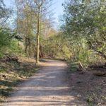 Weg im Friederika-Wäldchen